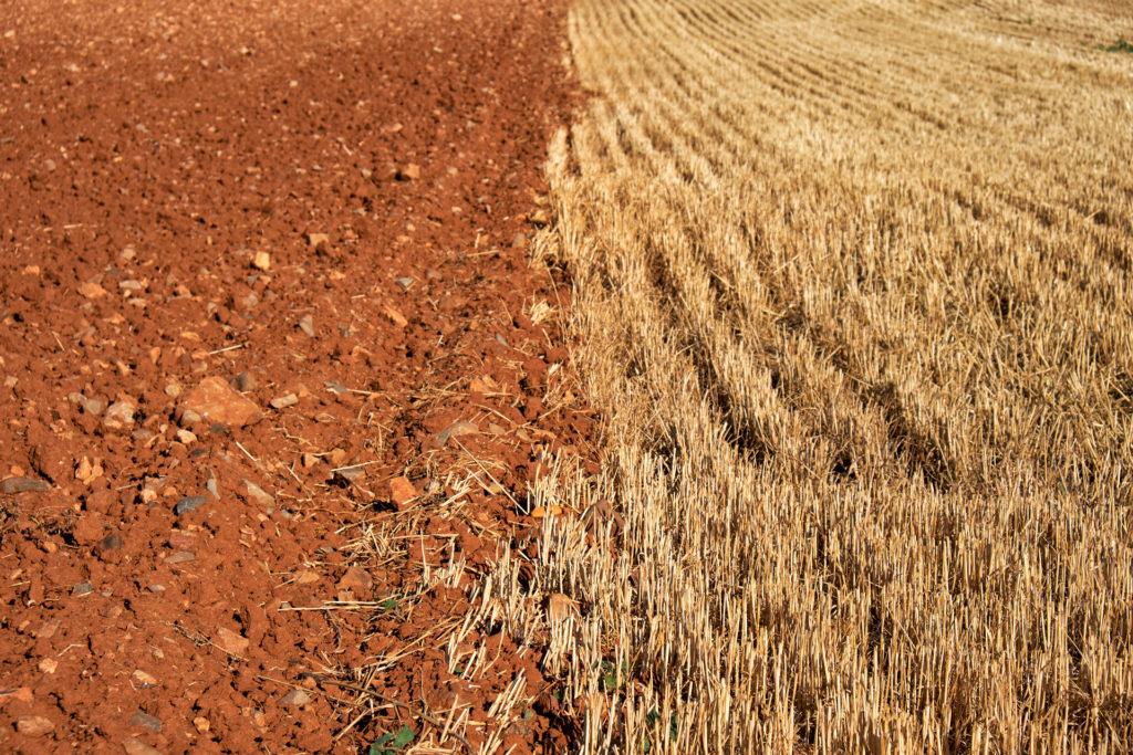 El rural nos ha hecho civilizados — Omnivoraz