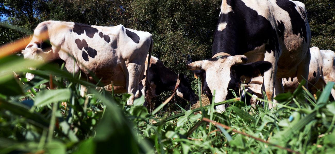 Paisajes deliciosos, deliciosos paisajes — Crónicas veterinarias — Omnivoraz