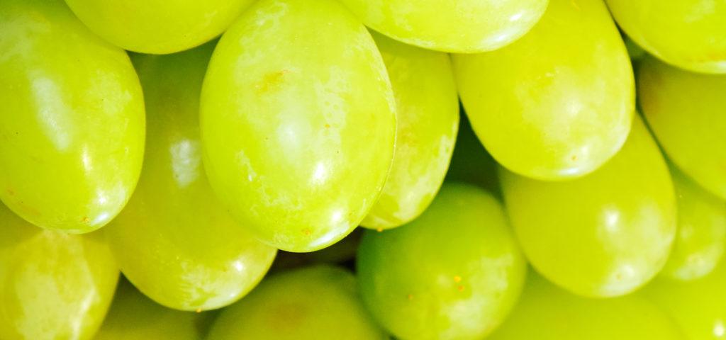 Curiosidades históricas: uvas contra los impuestos — Omnivoraz