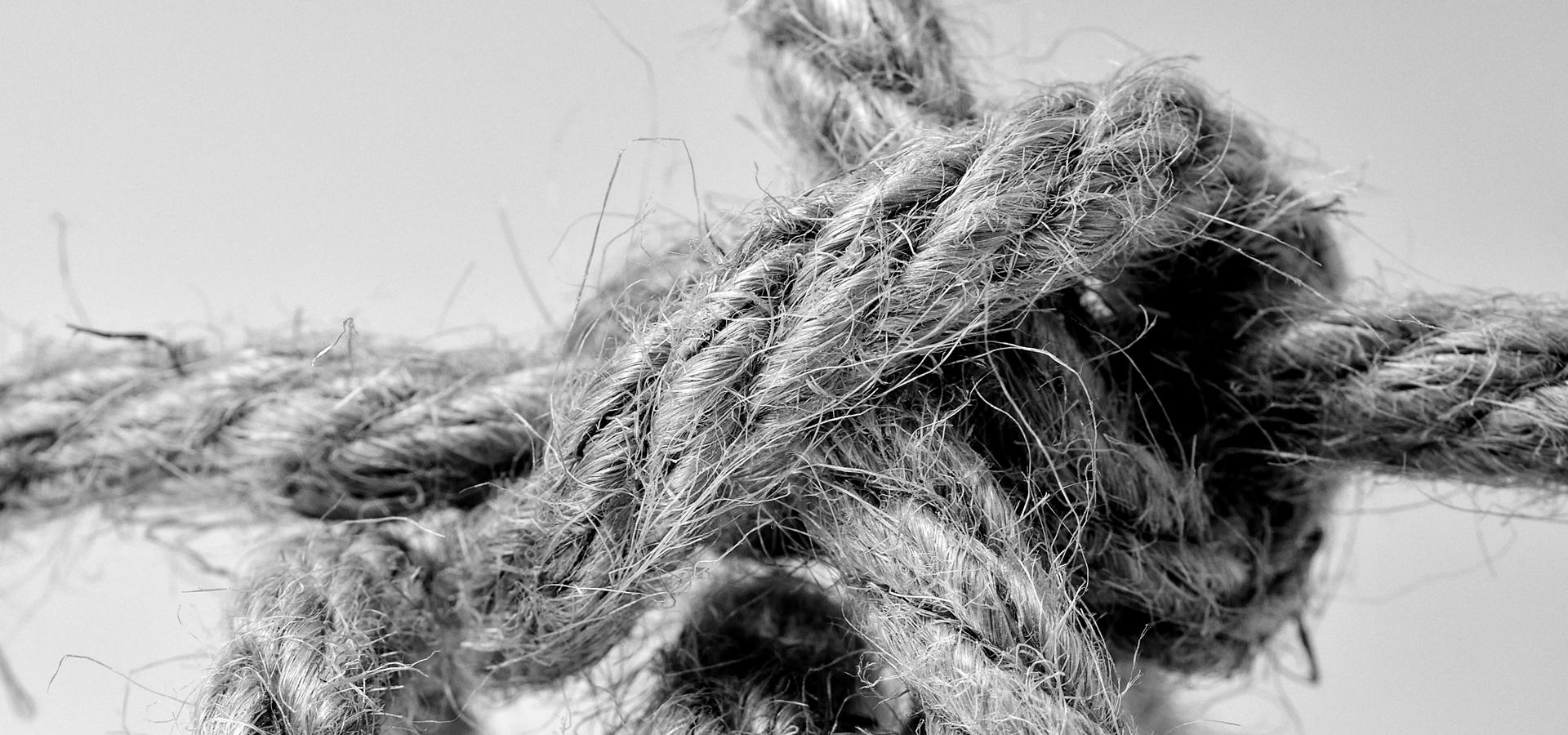La parábola de la atadura del camello — Omnivoraz