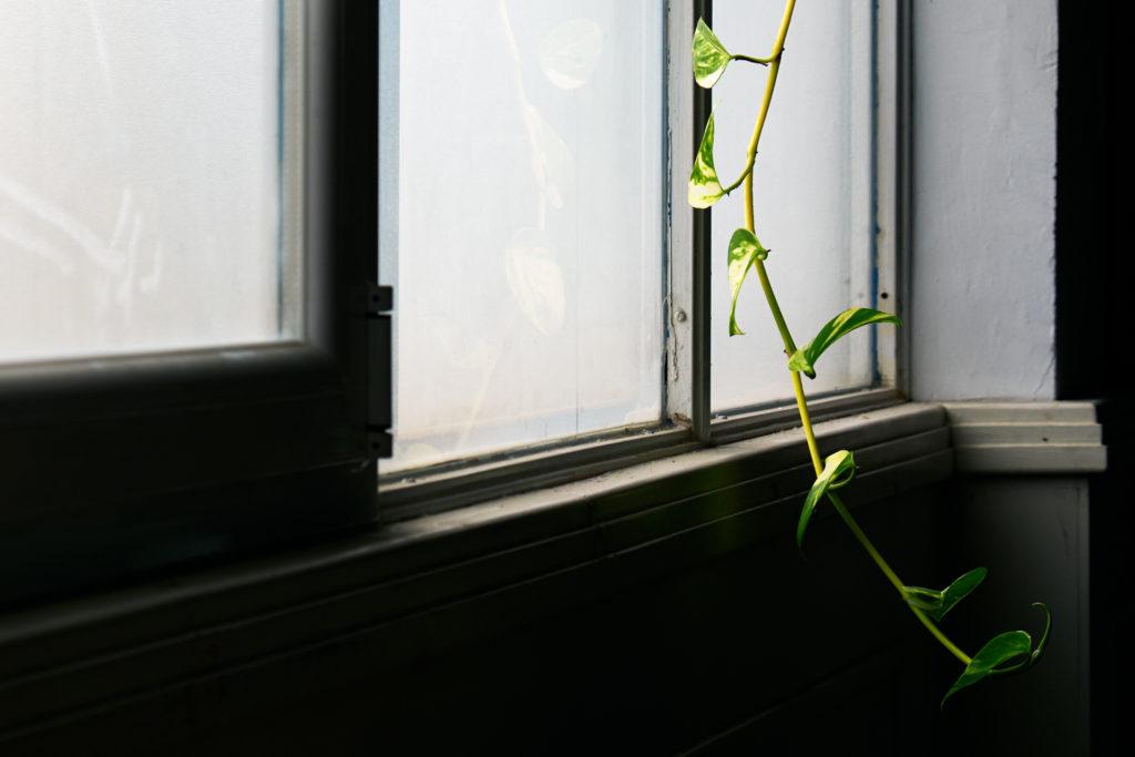 La ventana — Omnivoraz