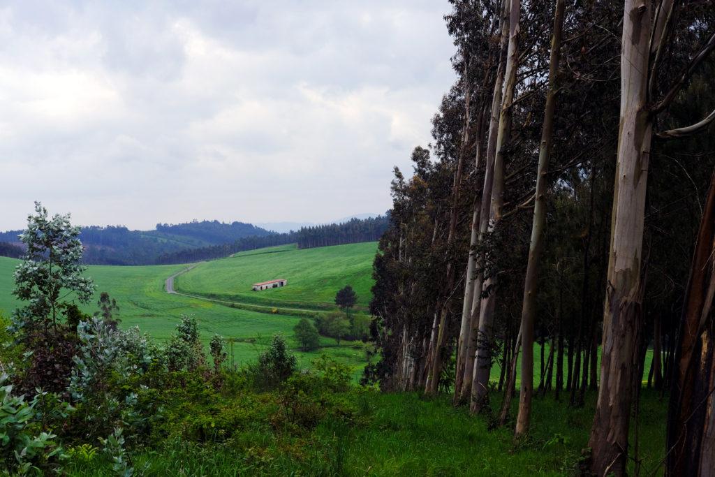 A propósito de la «legislatura del rural» — Omnivoraz