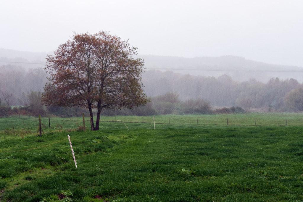 A sabedoría da muller rural — Omnivoraz