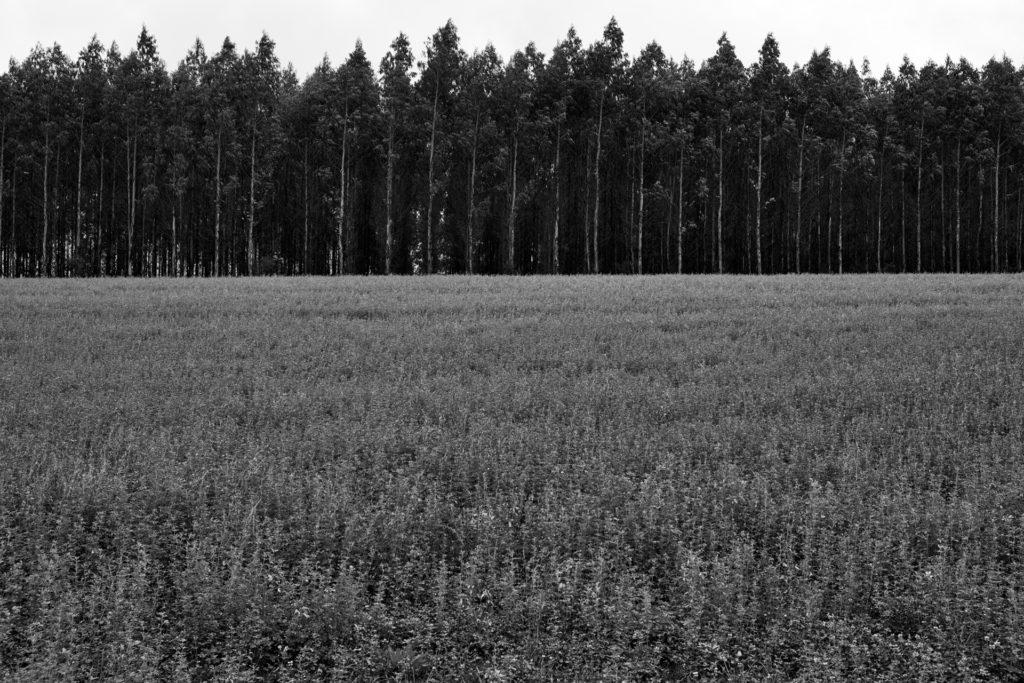 aJoan Alibés: la ganadería busca su terreno — Omnivoraz