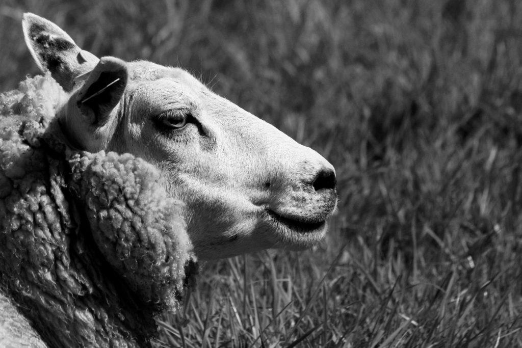 Joan Alibés: la ganadería busca su terreno — Omnivoraz