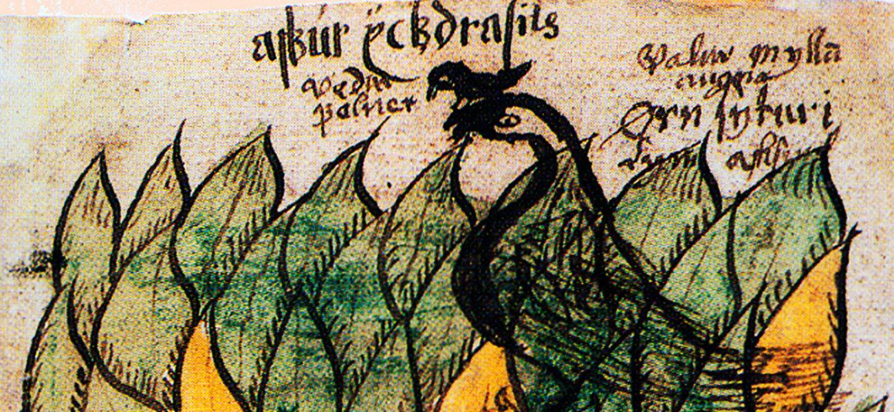 Curiosidades históricas: de Yggdrasil al árbol de Navidad — Omnivoraz